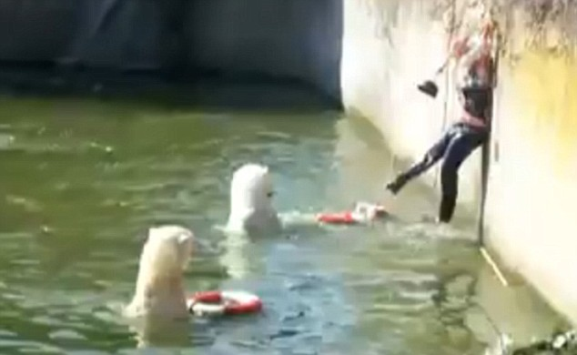 Image result for woman polar bears zoo berlin