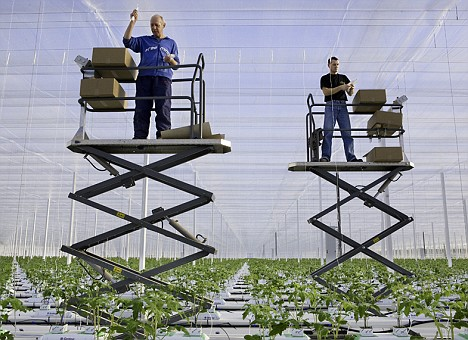 Thanet Earth in Kent uses hydroponic cultivation techniques to grow vegetables such as tomatoes, peppers and cucumbers