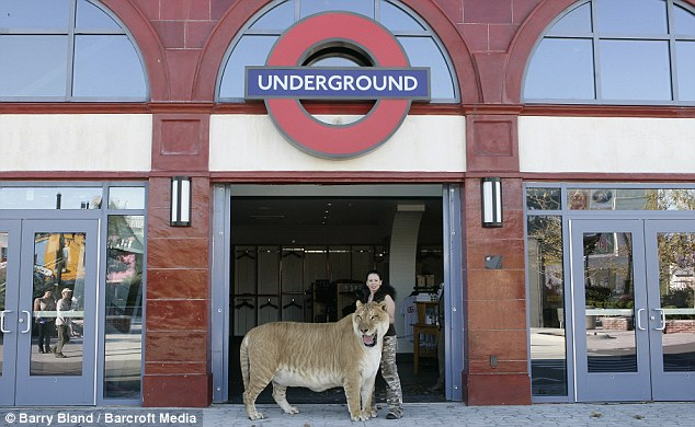 Hercules The Liger Outside the London underground