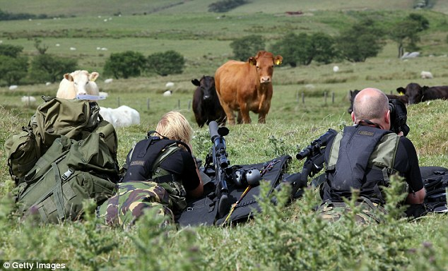 Shattered peace: As cows graze in the meadows, armed police sweep  the area. But had their quarry already departed the scene?
