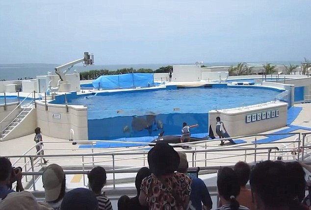 dolphin jumps out of tank