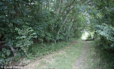 harrowdown hill
