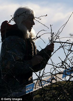 A member of the public gathers sprigs from the vandalised Holy Thorn tree that was cut down overnight