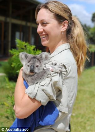 You beauty: An Australia Zoo Wildlife Hospital member of staff holds Frodo as she recovers from her injuries
