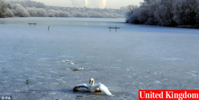 A swan tries to break free of the ice on the frozen lake at the Fairburn Ings Bird Sanctuary near Castleford, as the deep freeze in the UK continues