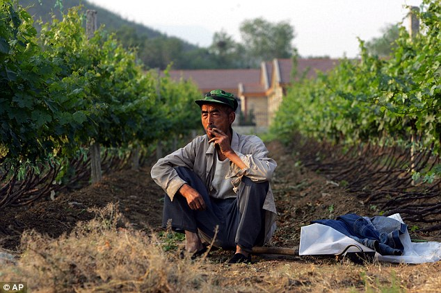 Unexpected: A worker at Chateau Bolongbao, which is part of a burgeoning Chinese wine business