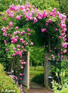 Monty Don Is It Ok To Move A Climbing Rose Daily Mail