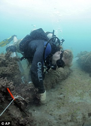 Divers recover cannons belonging to pirate Henry Morgan