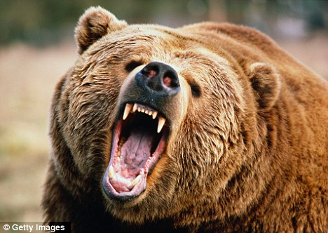 Image result for devouring bear