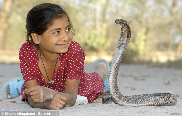 Look into me eyesssss: Little Kajol comes from a long line of snake catchers, and hopes one day to join the family business