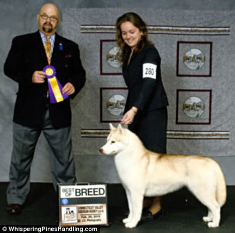 It's a dog eat drug world: Fierce competition leads to show handler's ...