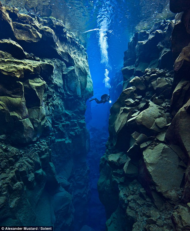 Growing gap: Alex Mustard, dived 80ft into the crevice between the North American and Eurasian plates near Iceland to capture these spectacular photos