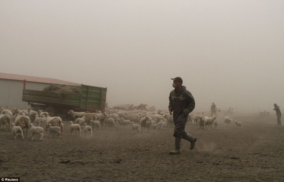 Farmers hurry to get their sheep into shelter. The thick cloud of ash blocked out daylight at towns and villages at the foot of the glacier where the volcano lies and covered cars and buildings