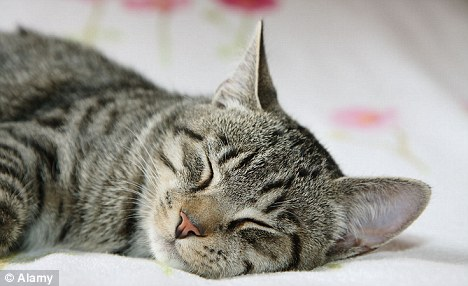 No more sneezes: Cat allergy is the most common pet allergy, causing ...