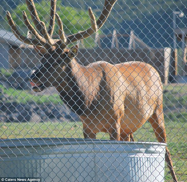 Pest Control In Boutte Mail: Reindeer Saves Rat's Life, Spreads Holiday Cheer