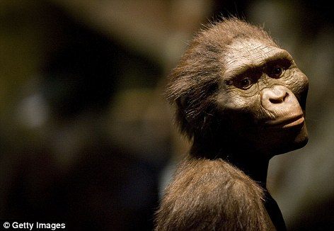 The Australopithecus afarensis footprints are thought to date back 3.7million years