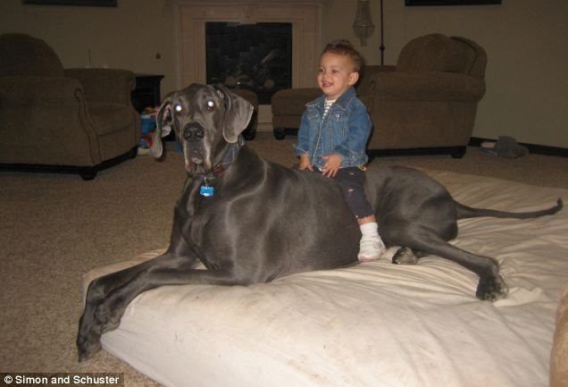 A doggone miracle: George the Great Dane with the Nasser's daughter Annabel at home in Arizona