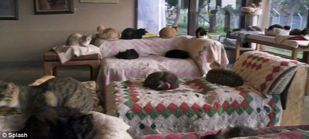 Cat house: Divorcee Lynea takes in rescue cats from around the world and has helped rehome 19,000 of the animals