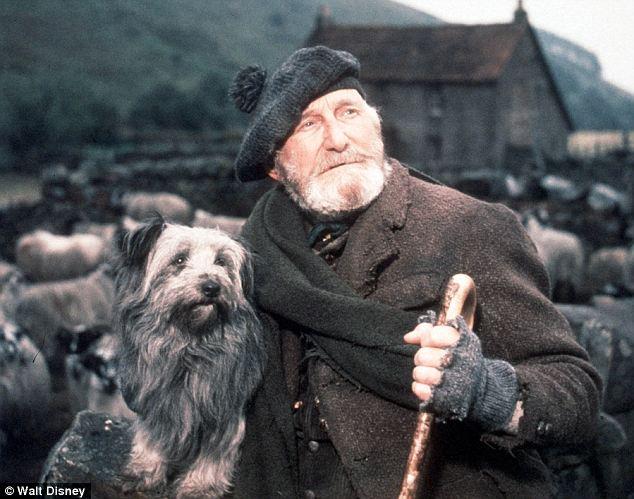 Greyfriars Bobby hoax: Dog who kept vigil over his master's grave ...