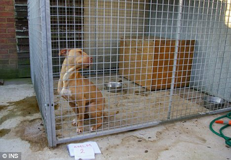 Caged: The dogs were kept in squalid conditions in between fights