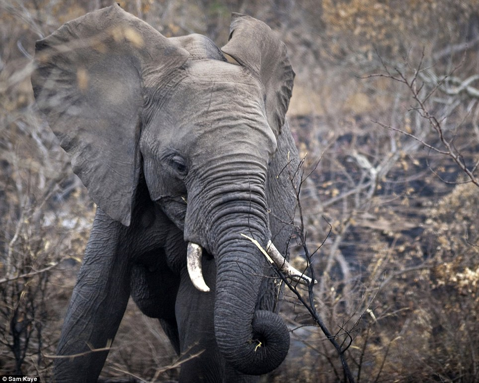 This elephant photo was one of the images Sam submitted for judging. Candidates must enter ten pictures which are judged anonymously with one third of those who enter failing
