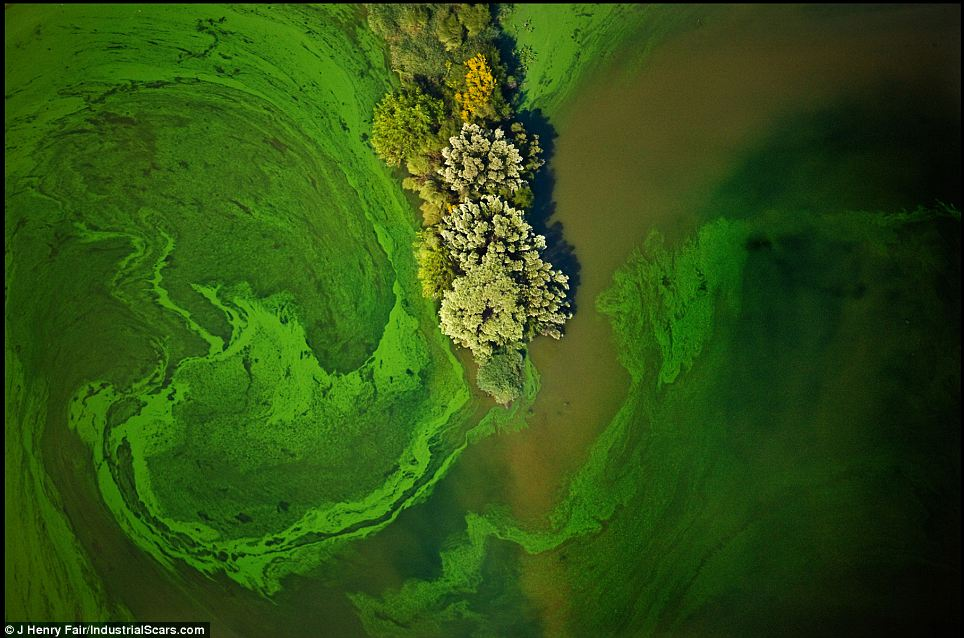 Bushes push out into a pond where the world's most widely used herbicide is manufactured in Luling, Texas