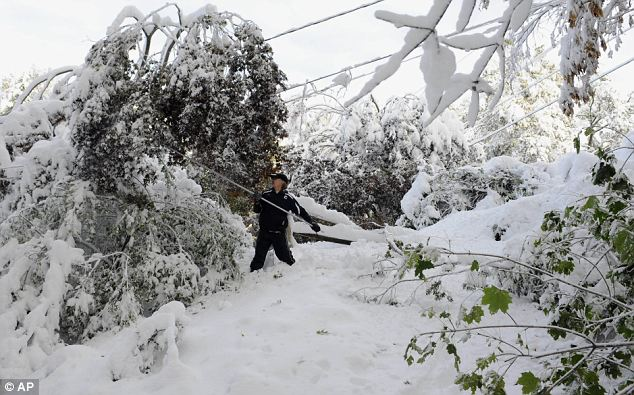 Clean up begins: Jay Ericson clears snow of branches weighing down on power lines at his home following a snow storm a day earlier in Glastonbury, Connecticut today