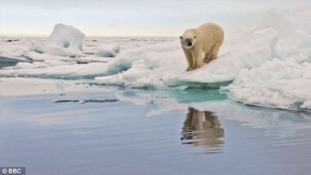 Hot topic: The plight of polar bears captures the hearts of many, but are the ice caps still shrinking?