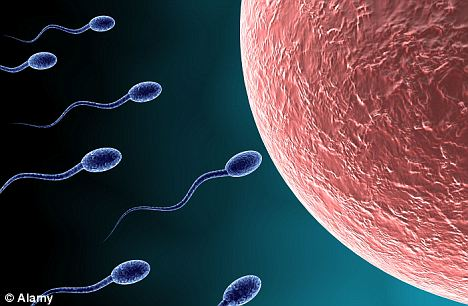 Concern: A quarter of sperm exposed to WiFi radiation in the study were no longer swimming around after four hours