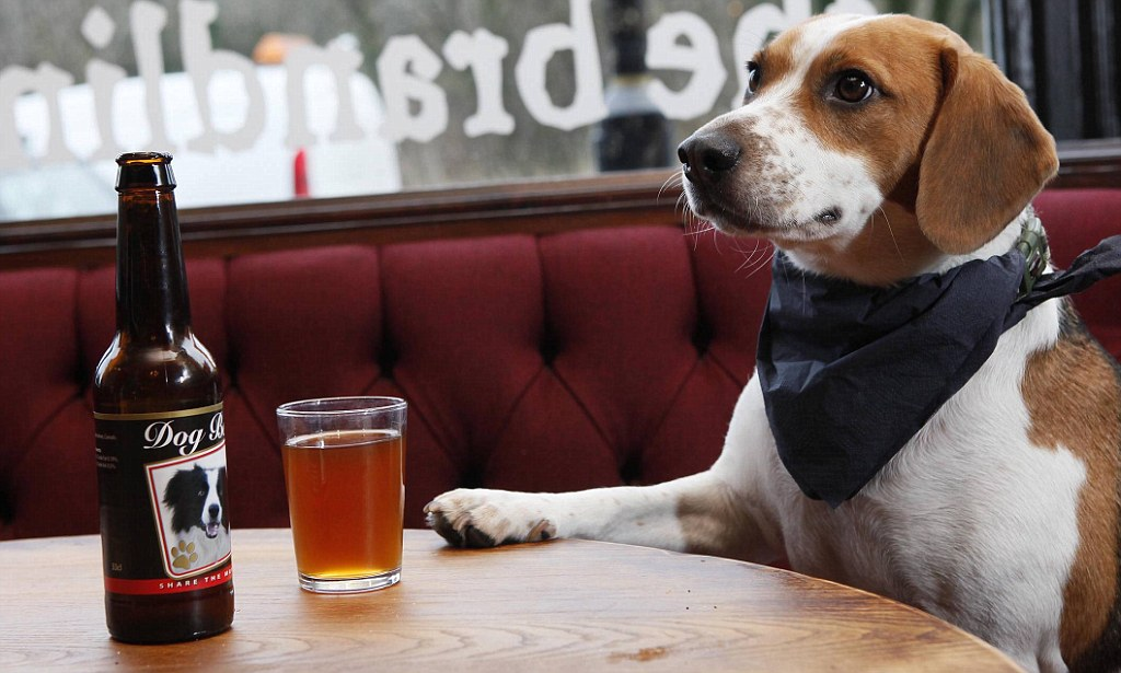 Pub Sells Special Beer For Dogs Newcastles Brandling Villa Offers Mans Best Friend A Pint