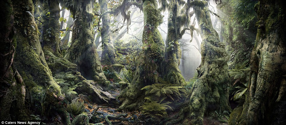 Hidden depths: At first glance this looks like a picturesque image of a leafy rainforest