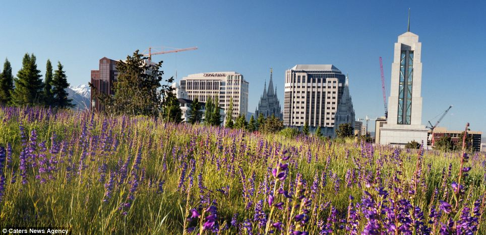 Purple haze: A meadow of wild flowers on a conference centre roof
