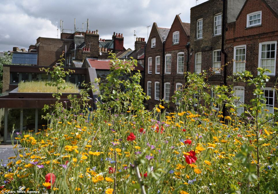 Green power: These vibrant flowers help keep this solar-powered house energy efficient