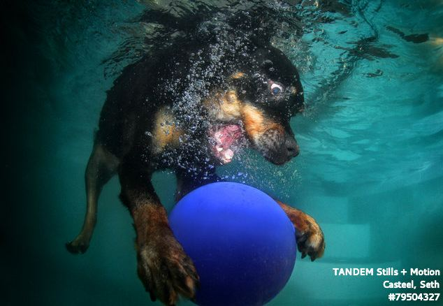 Open wide: Some dogs looked more menacing as they bared their teeth to grab the balls