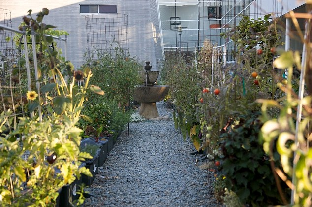 Gardens outside the Googleplex