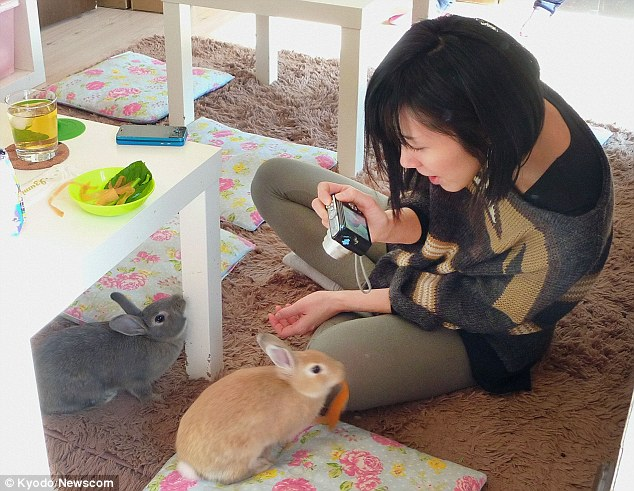 All ears: A diner plays with bunnies at Tokyo's rabbit cafe, which offers customers dining with a difference