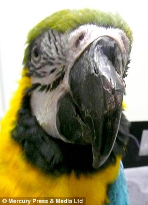 Who S A Pretty Boy Then Parrot Has Nose Job After