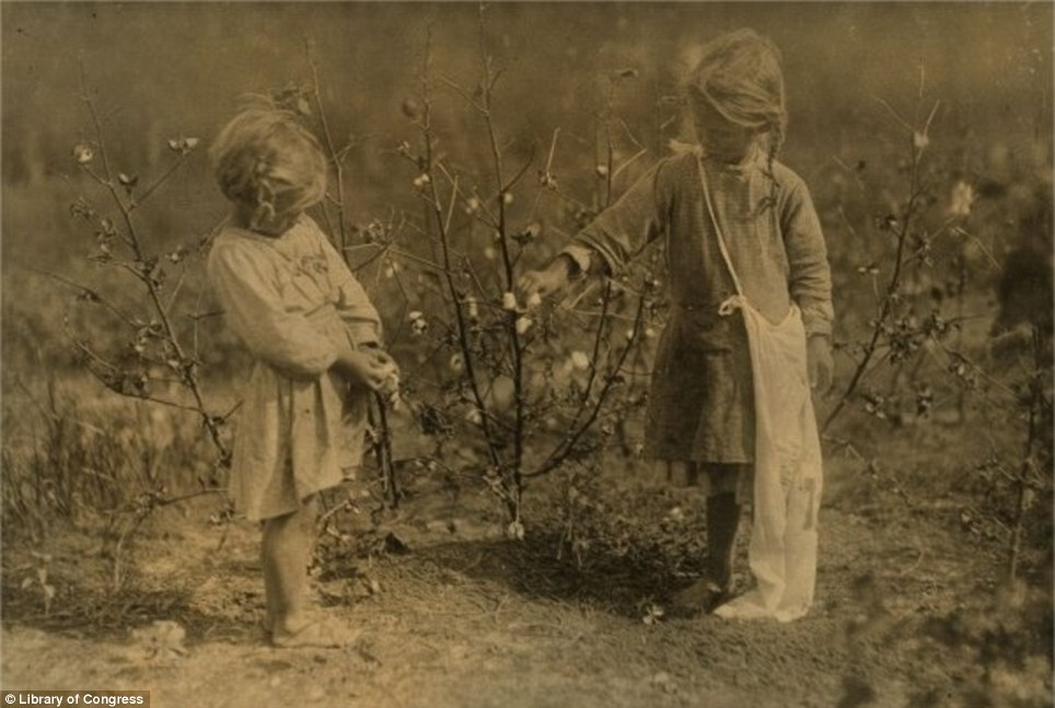 Starting young: Two girls, aged four and five, pick cotton while wearing no shoes in Texas in October 1913
