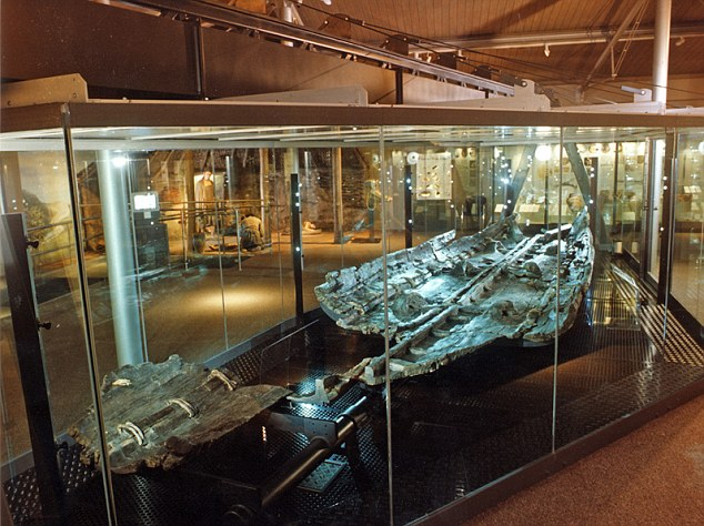 The Dover Bronze Age boat on display in a museum. Researchers aim to find out how people crossed the channel in 1550BC