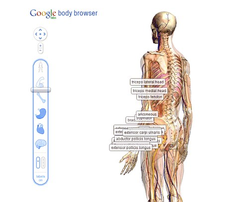 Google's prototype 'body' browser: Scientists hope to build similar 3D models of individual patients to test out therapies on a 'virtual' version