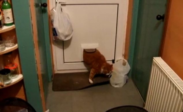 In the hilarious footage Biff can be seen poking his head through the flap but as he tries to come through the door he gets stuck half way