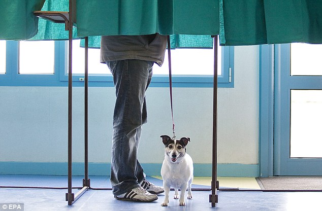 Pet's welcome: A man casts his vote in a voting booth in Henin-Beaumont, Northern France, while his dog waits patiently