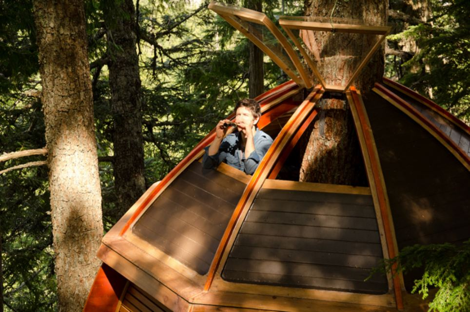 Admiring the view: Joel Allen in the treehouse he built using items from Craigslist