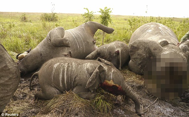 Barbaric: In a scene too graphic to show in full, the carcasses of some of the 22 massacred elephants lay strewn across Garamba National Park in the Congo after being gunned down by helicopter-borne poachers