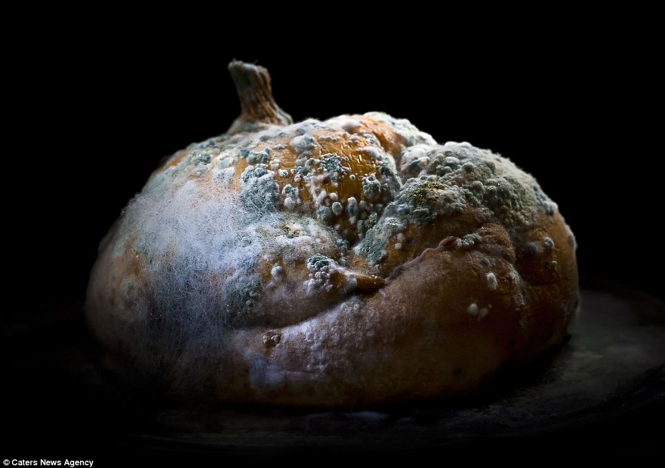 Implosión: Esta calabaza podrida se ha derrumbado sobre sí mismo y está cubierta de una sustancia tóxica en busca moho verde y peludo