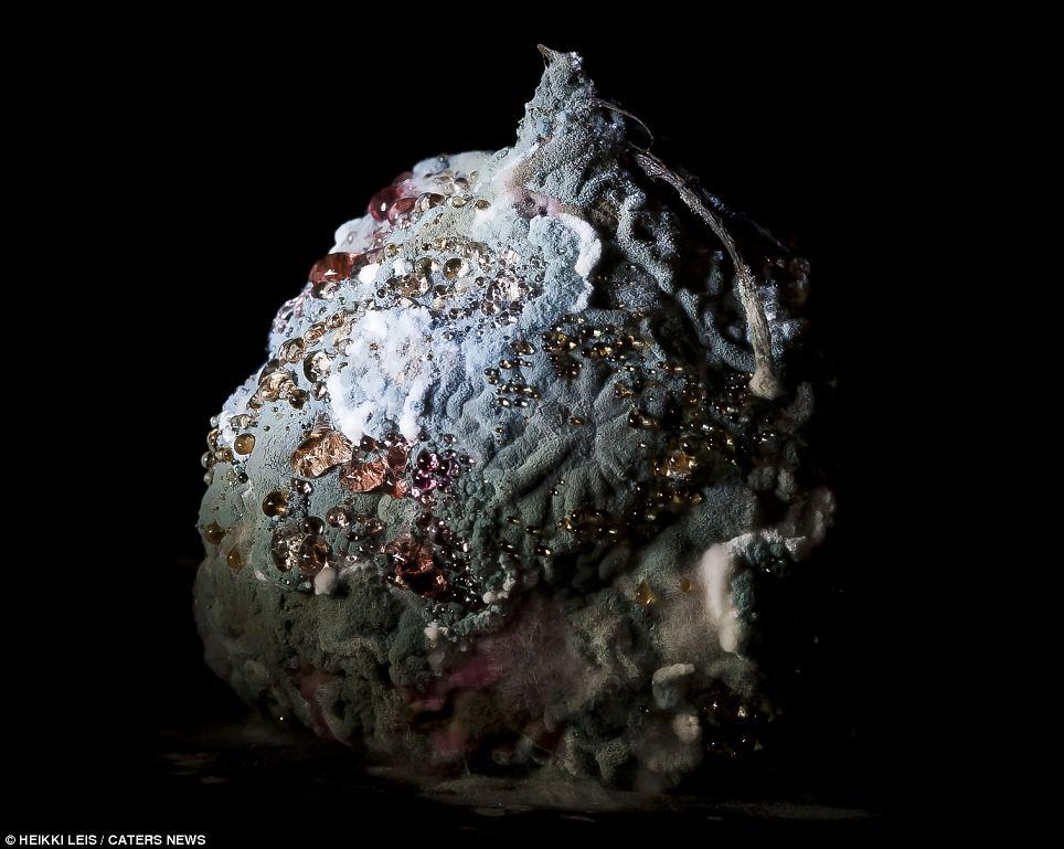 Mi preciosa: Las gotas de humedad brillan como piedras preciosas en la superficie de esta remolacha podrida