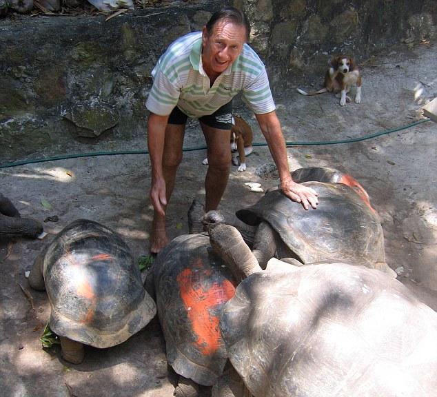 A vida real Robinson Crusoe: Brendon tem ajudado a preservar tartarugas gigantes da região. Ele pinta-los com números de identificação e até mesmo nomes de lhes