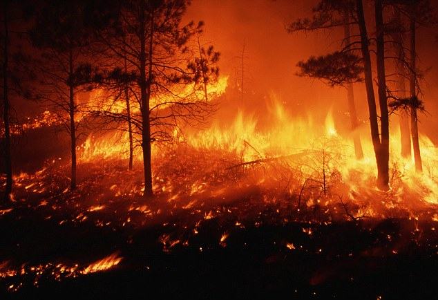 A fire burning out of control in a pine forest on the Mescalero Apache Indian Reservation in New Mexico: Al Qaeda has issued instructions to its followers to start intentional fires in the United States