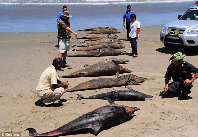About 600 dolphins were also washed ashore on the same region earlier this year and the cause of their deaths is still being investigated