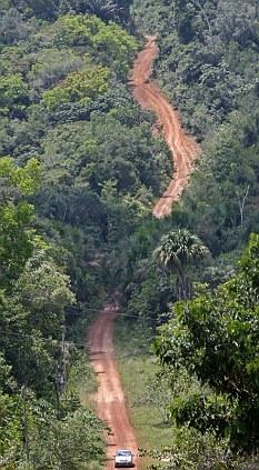 Rainforest in Brazil: